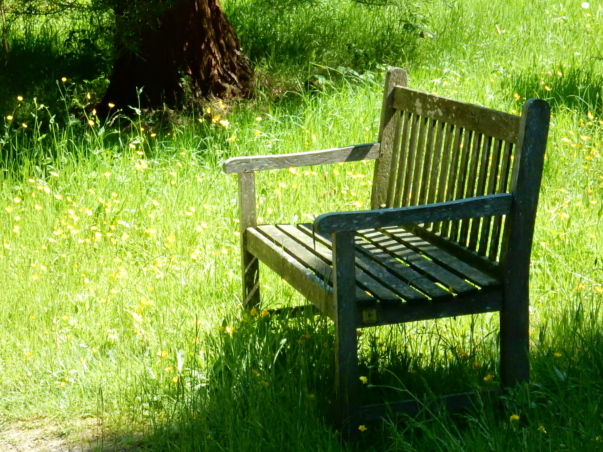 Bench in amongst the grass